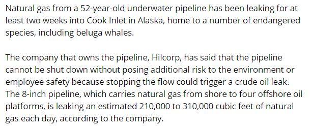 cook-inlet-gas-leak-alaska-hilcorp-beluga-whales