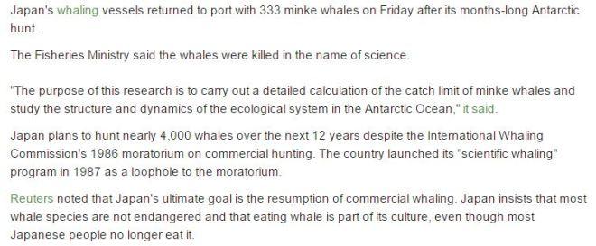 japan-whale-hunt-2338123515